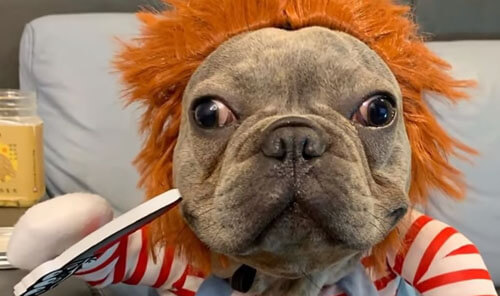 собака в виде куклы-убийцы
