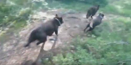 отличная выучка терпеливых собак