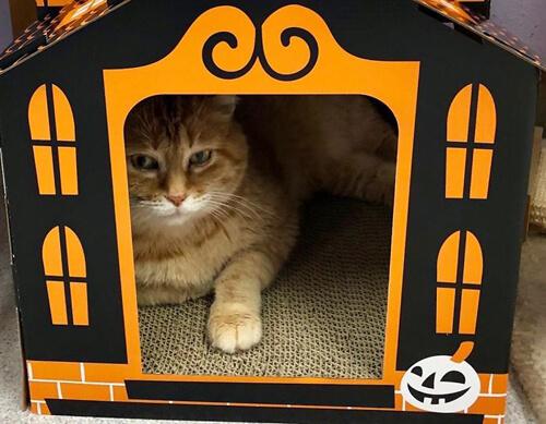 замки с привидениями для кошек