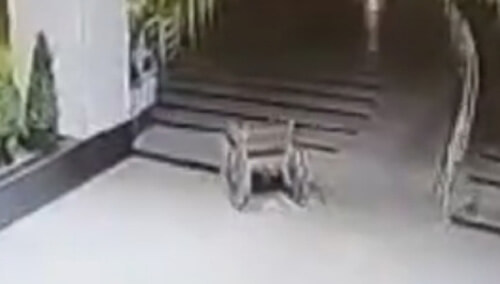 катающаяся инвалидная коляска