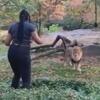 незнакомка дразнит льва в зоопарке