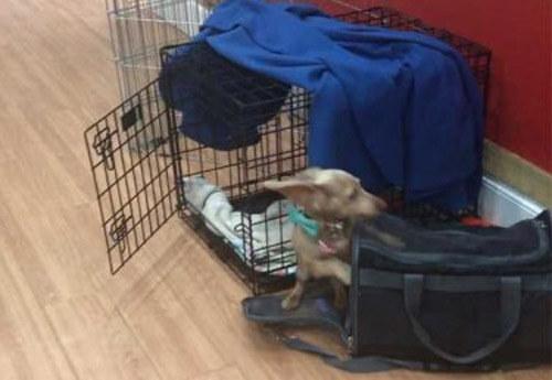 щенок заранее прыгнул в сумку