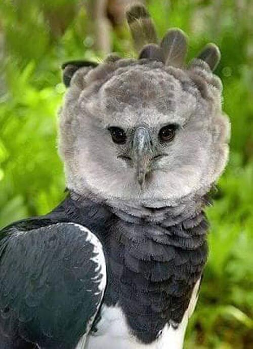 птица похожа на человека