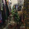 олень заблудился в магазине одежды