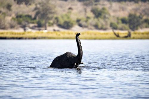 слон похож на водного монстра