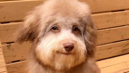 пёс с человеческими глазами
