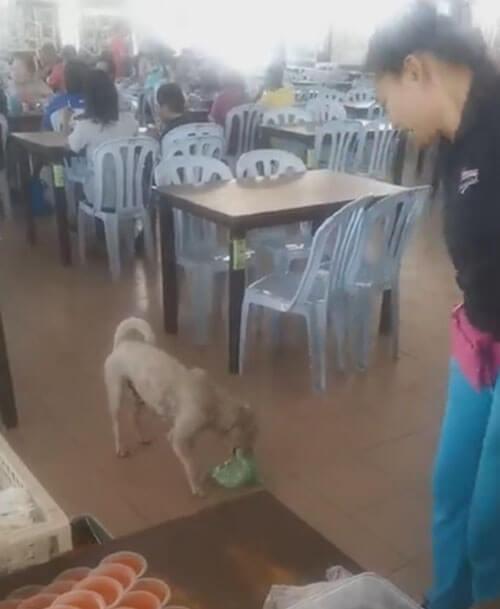 пакет с едой для собаки