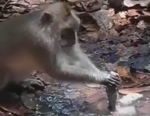 обезьяна экономит воду