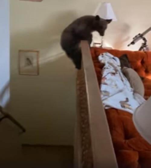 медвежонок играет на лестнице