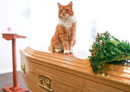 кот регулярно ходит на похороны
