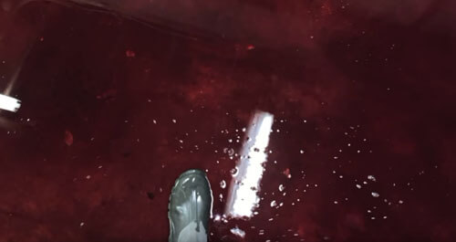 подвал затопило кровью