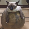 упитанная кошка в горшке