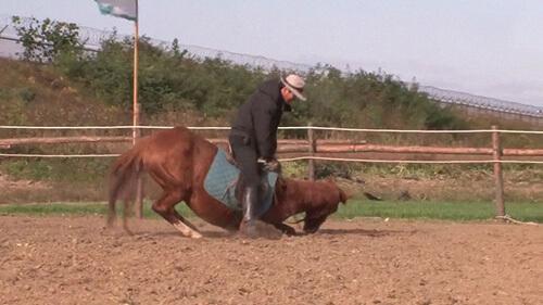 лошадь притворяется мёртвой
