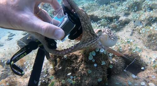 осьминог крадёт камеру