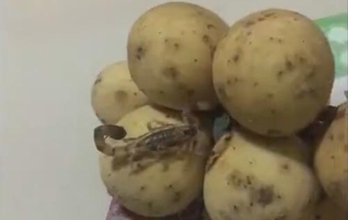 скорпион ползает по фруктам