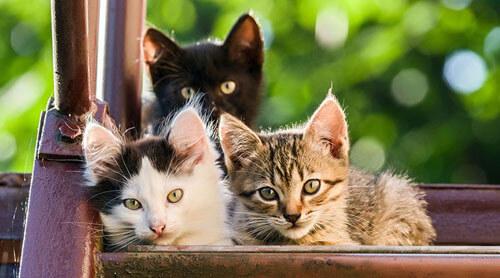 кошки спасли хозяев от оползня
