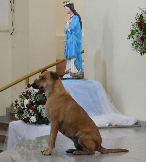 бездомные собаки в церкви