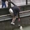 собака упала в реку