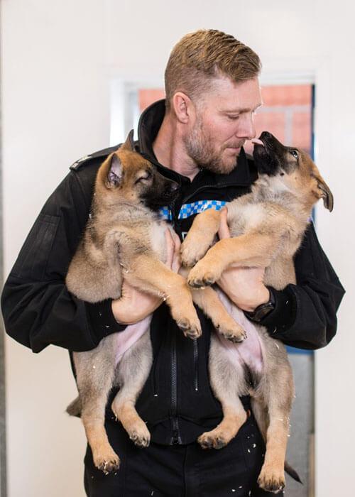симпатичные полицейские собаки