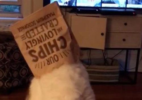 кот с бумажным пакетом на голове