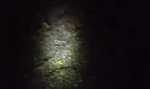 ночная охота на бигфута