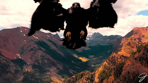 дрон разозлил хищную птицу