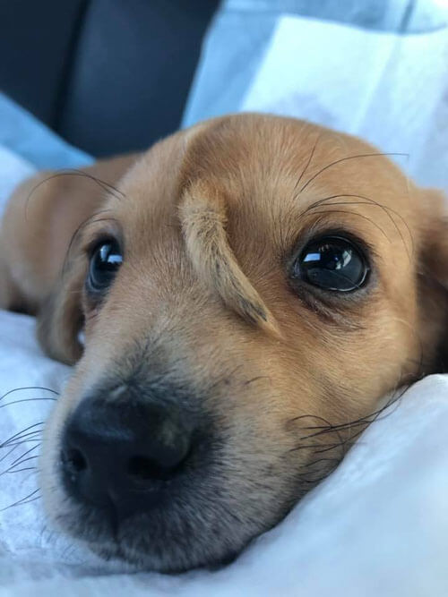 удивительный щенок-единорог