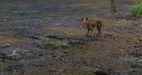 собака в резервуаре для воды
