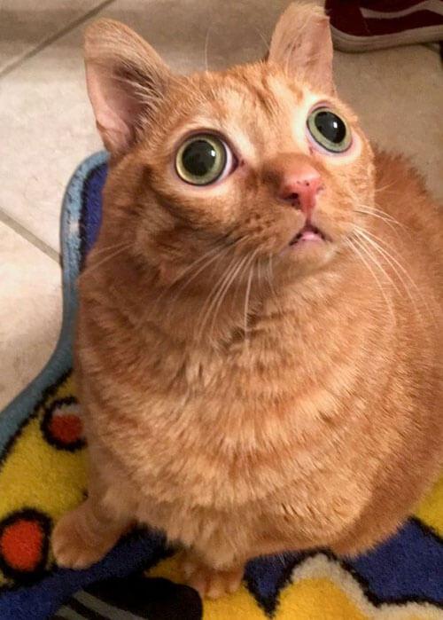 кот с выразительным взглядом