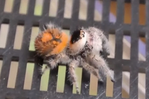 голодный маленький паучок