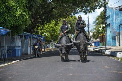полицейские оседлали буйволов