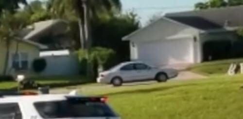 собака каталась по кругу в машине