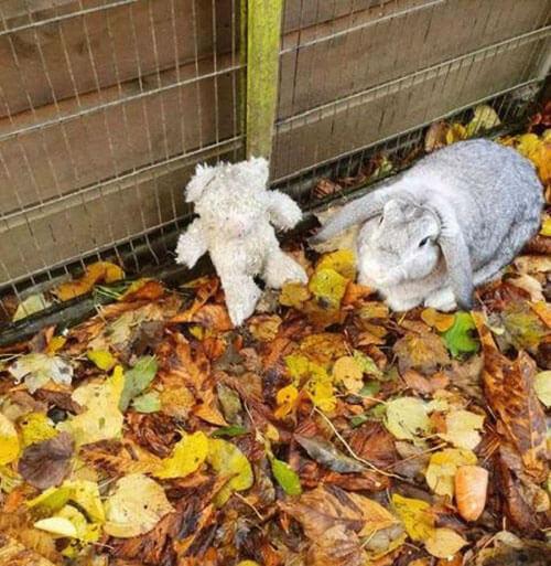 кролик с плюшевым медведем