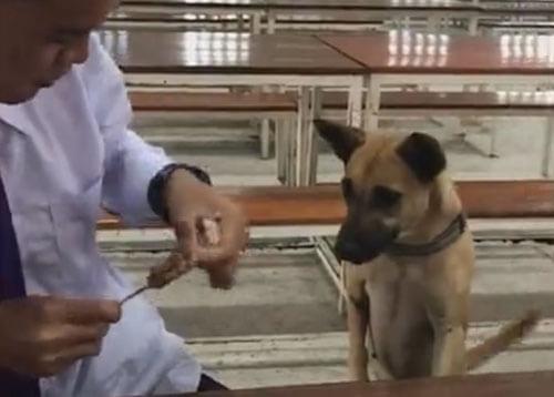 собака ограбила студента
