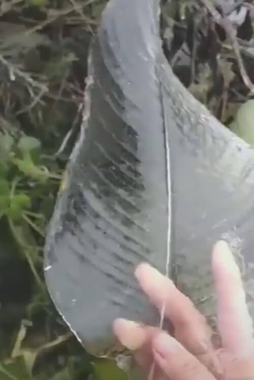 корка льда на листе растения