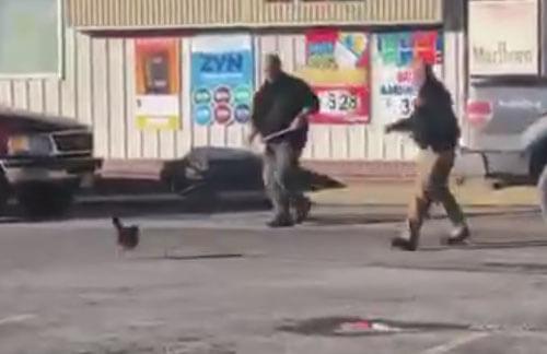 охота на быстроногих кур