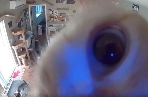 кот и камера видеонаблюдения