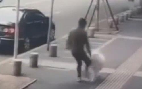 собаку обвинили в преступлении