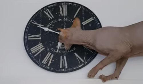 кот играет с часами