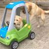 щенок катается в машинке