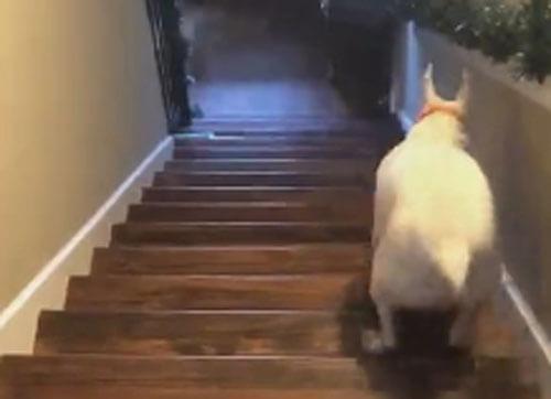 весёлый пёс на лестнице