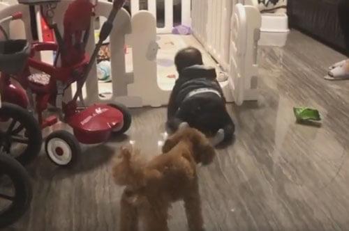 собака воспитывает малыша