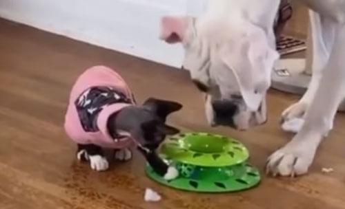интересная кошачья игрушка