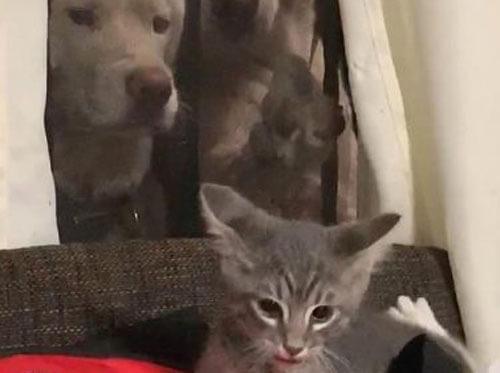 пёс напугал котёнка через окно