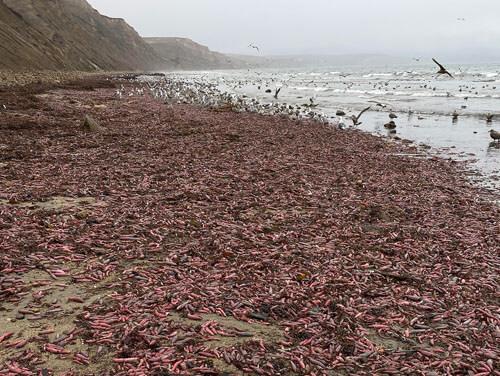 червей вымыло на пляж