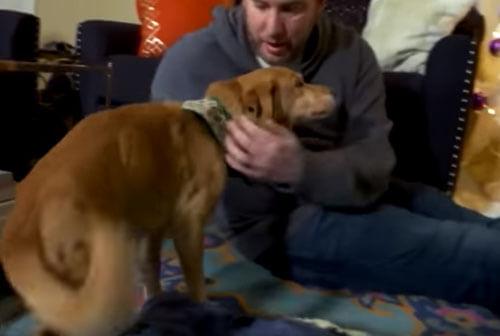 приют для бездомной собаки