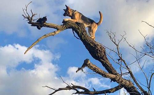 собака залезла за кошкой на дерево