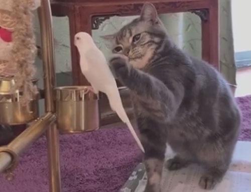 кошка и маленький попугайчик