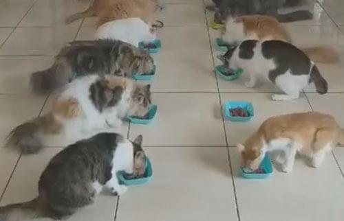 массовая трапеза кошек