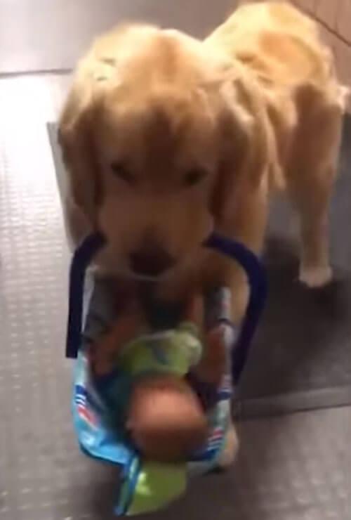 собака украла игрушки